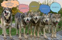 wolfs_vs_zbxnext-1.jpg